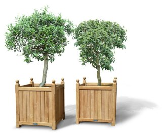 Set of 2 Extra Large Versailles Teak Garden Planters