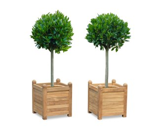 Set of 2 Zen Large Teak...